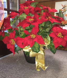 Anna's House of Flowers - pointsettia